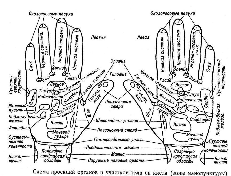 283С каким органом связаны пальцы рук