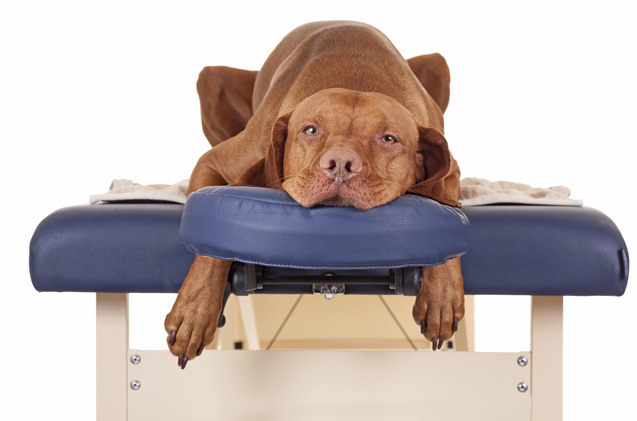 Массаж для собак